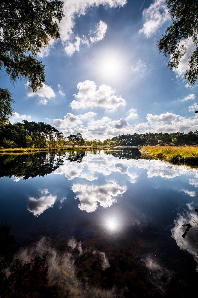 Reflecting marshes